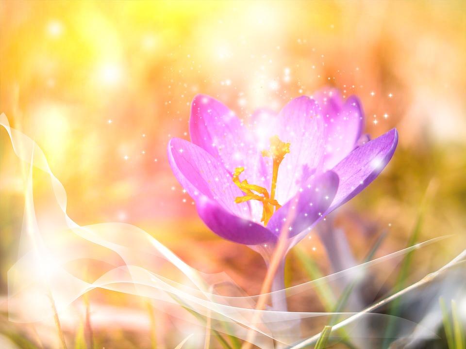 ELISE-Energie – Bedingunglose Liebe